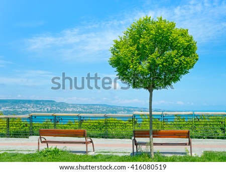 Sitting on the viewing platform. Comfortable benches. Lonely tree on a background seascape closeup. Large green leaves. Blue sky - stock photo