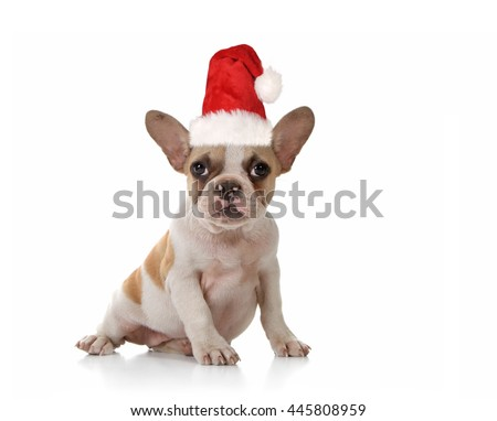 Sitting Puppy Dog With Cute Expression Studio Shot - stock photo