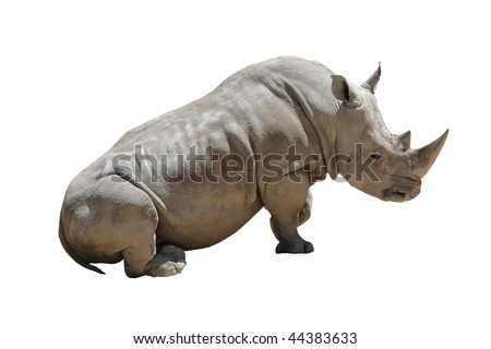 Sitting White Rhino Isolated on White Background with Clipping Path - stock photo