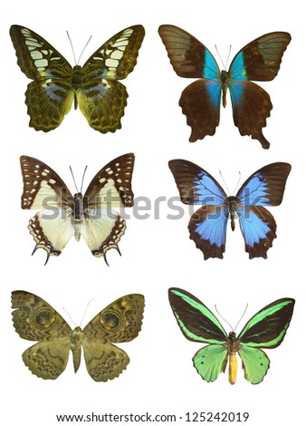 six butterfly on white - stock photo