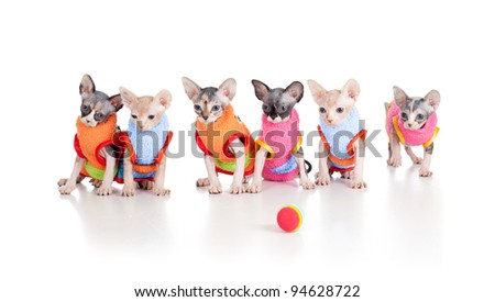 Six funny hairless kittens with ball brood of Canadian sphynx - stock photo