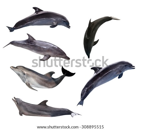six grey dolphins isolated on white background - stock photo