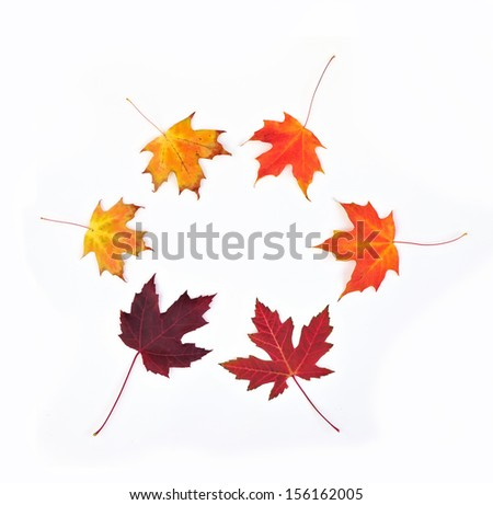 Six maple leaves arranged in circle - stock photo