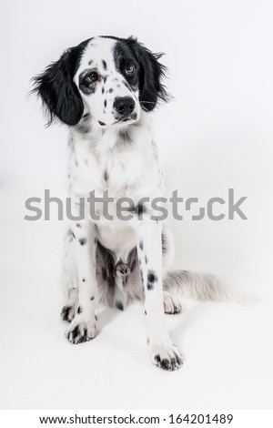 Six months old puppy isolated - stock photo