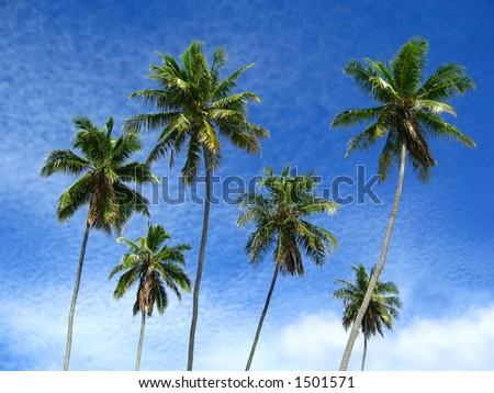 Six Palms - stock photo