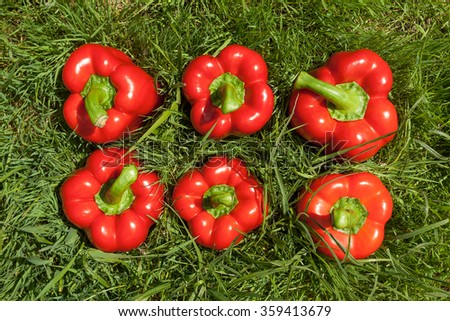 Six red fresh pepper on bright green grass. Summer village harvest illustration.  - stock photo