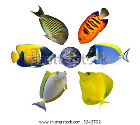Six tropical fishes around the globe showing North America and Pacific. Isolated on white. Earth image courtesy of NASA http://visibleearth.nasa.gov/ - stock photo