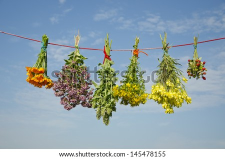 six various  medical herbs bunches on clothes string and sky background - stock photo