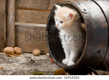 Six weeks old kitten in a wooden barrel - stock photo