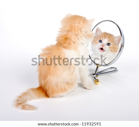 Six weeks old kitten looking in a mirror - stock photo