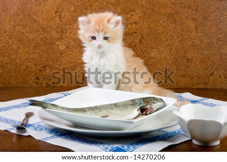 Six weeks old kitten meeting his first fish - stock photo