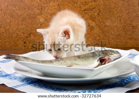 Six weeks old kitten tasting his first fish - stock photo