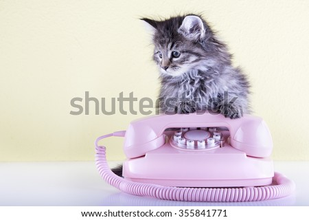 Six weeks old kitten using an pink vintage telephone - stock photo