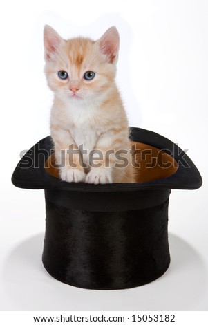 Six weeks old red kitten in a top hat