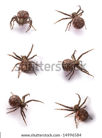 Six yellow spiders on a white background