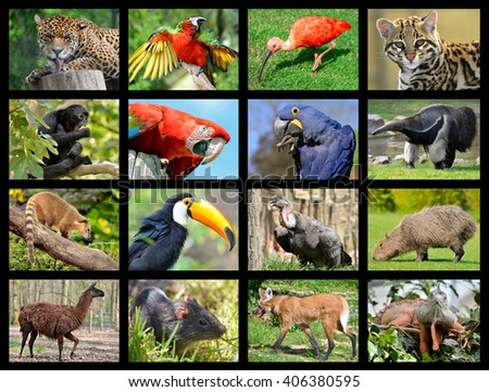 Sixteen mosaic photos of South American animals - stock photo