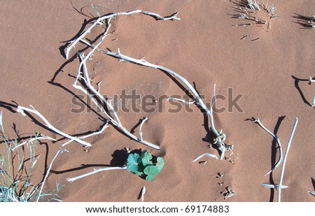 Skeletal carcase of dead tree in desert environment due to drought