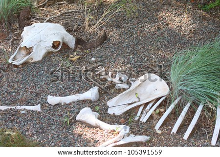 Skeletal remains of a large animal - stock photo