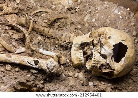 skeleton - stock photo
