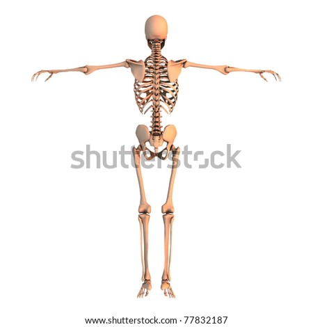 Skeleton - stock photo