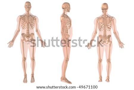 skeleton anatomy - stock photo