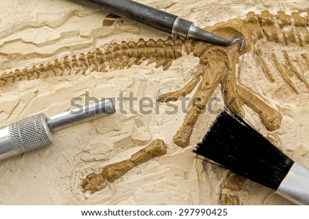 Skeleton and archaeological tools.Training for dig fossil. - stock photo
