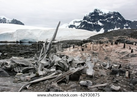 Skeleton and penguins in Antarctica - stock photo