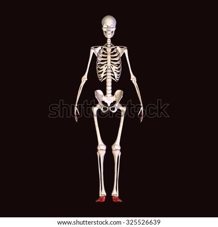 skeleton foot pain - stock photo