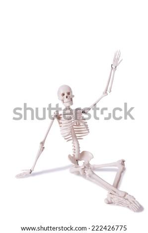 Skeleton isolated on the white background - stock photo