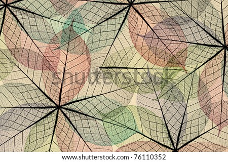 Skeleton leaf abstract - stock photo
