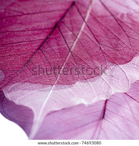 Skeleton leaf abstract background - stock photo