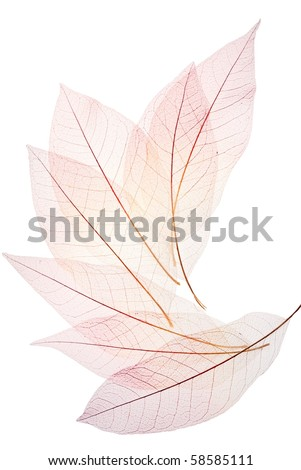 Skeleton leaf background - stock photo
