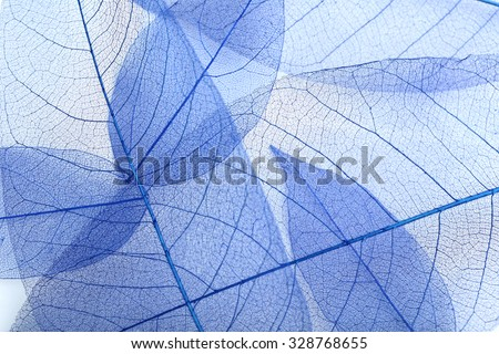 Skeleton leafs background, close up - stock photo