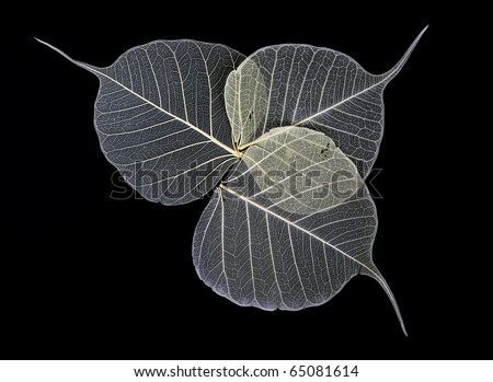 Skeleton Leaves Flower Composition on black background - stock photo