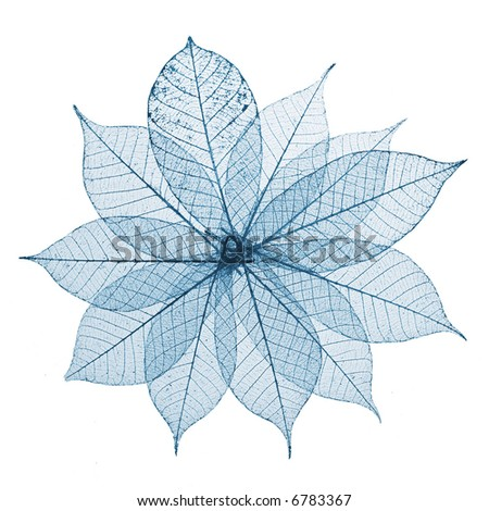 Skeleton Leaves Flower Composition on white background - stock photo