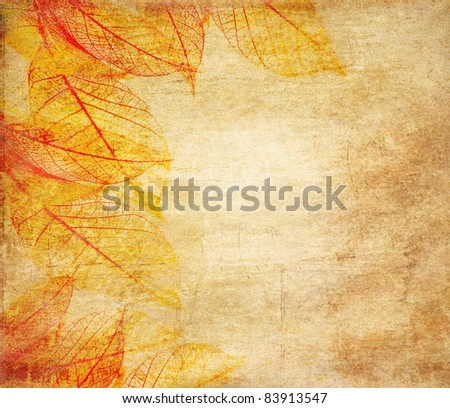 Skeleton leaves grunge  background - stock photo