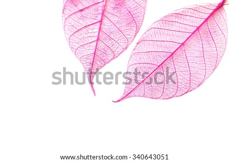 Skeleton leaves isolated. Leaf veins, Leaf skeleton silhouette