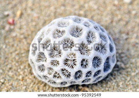 Skeleton of a stony coral on the beach - stock photo