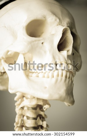 skeleton of human with old color style - stock photo