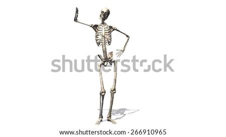 Skeleton - separated on white background