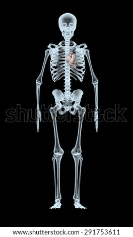 skeleton X-Ray displaying heart. isolated 3d illustration on a black background - stock photo