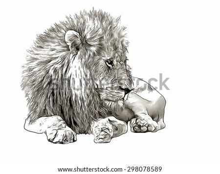 Sketch lion portrait - stock photo