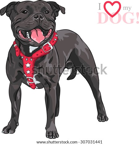 sketch of the black dog Staffordshire Bull Terrier breed in red pinch collar - stock photo