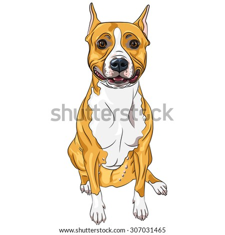 sketch of the smiling dog American Staffordshire Terrier breed sitting - stock photo