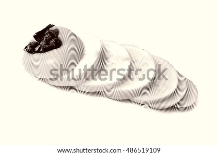 Sketch painting Persimmon fruit isolated on the white background Black and white