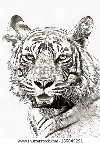 Sketch pencil tiger portrait over white - stock photo