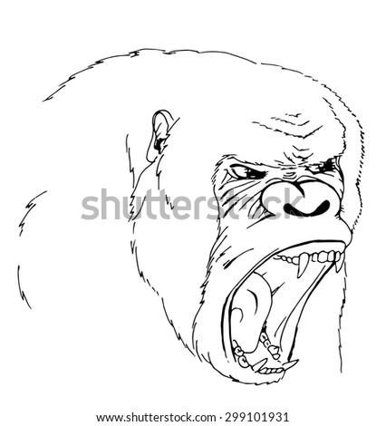 Sketch scream orangutan. Alpha male. White isolated. - stock photo