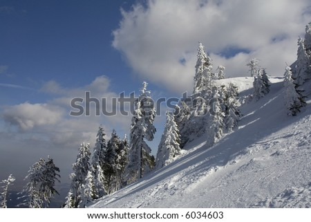 Ski path in a sunny day with firs cover with snow
