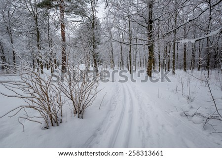 Ski piste in the beautiful winter forest with lots of snow. - stock photo