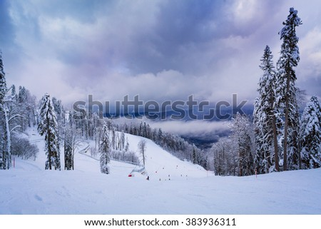 Ski resort and covered with snow firs